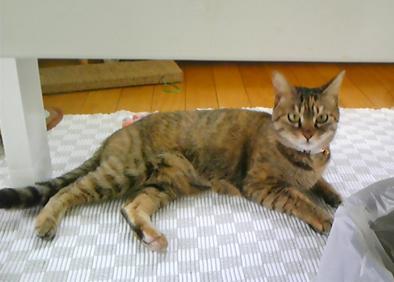 鞠姫の卒業_c0223478_11545072.jpg