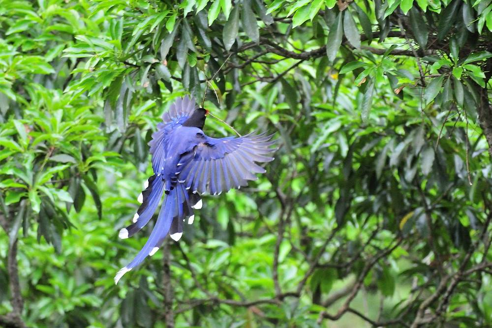 台湾の野鳥と言えば_a0143780_20211932.jpg