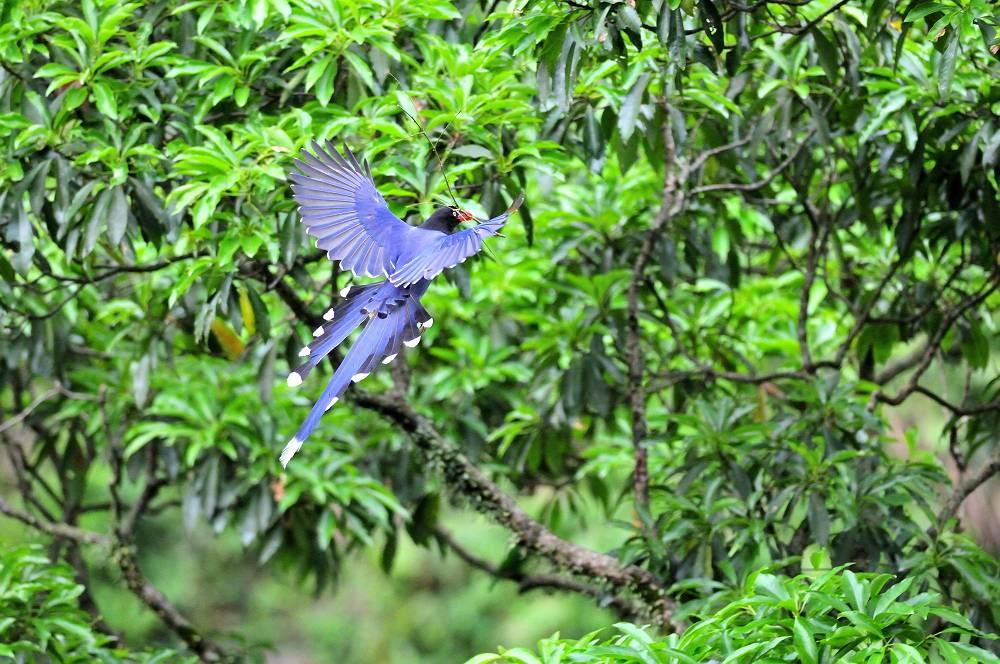 台湾の野鳥と言えば_a0143780_2021533.jpg