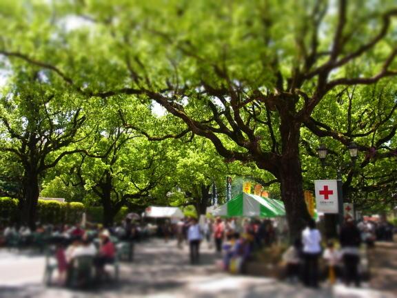 新緑の楠並木通りでは.........._d0127182_1655656.jpg