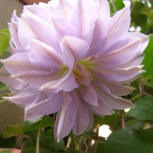 バラの季節_d0104091_1385462.jpg