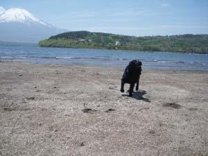 湖畔で遊んだよ!_b0084194_1431497.jpg