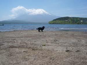 湖畔で遊んだよ!_b0084194_1432698.jpg