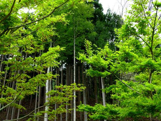 北山 花背交流の森あたり_e0048413_1971466.jpg