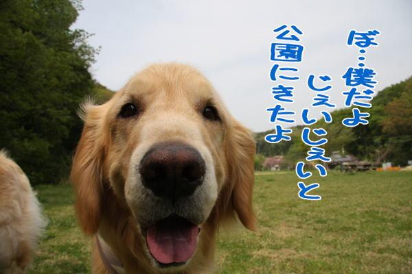 f0109418_036089.jpg
