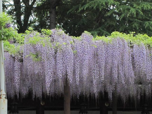 ☆ 春の花を求めて(③) ☆ _a0004023_204827.jpg