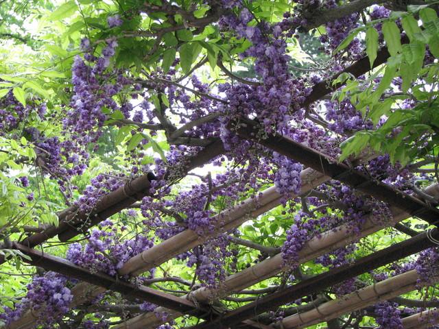 ☆ 春の花を求めて(③) ☆ _a0004023_20504099.jpg