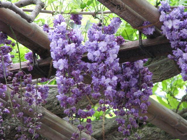 ☆ 春の花を求めて(③) ☆ _a0004023_20512695.jpg