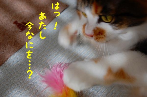 c0181639_1135985.jpg