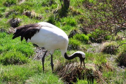 WATARIDORIと留鳥 5月15日_f0113639_13131260.jpg