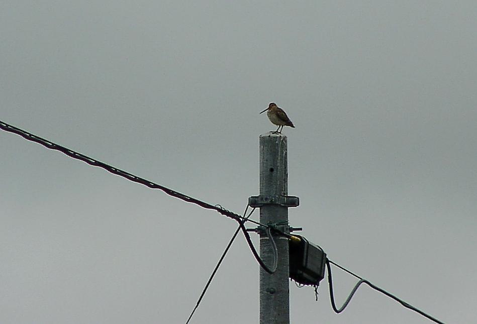 WATARIDORIと留鳥 5月15日_f0113639_13133391.jpg