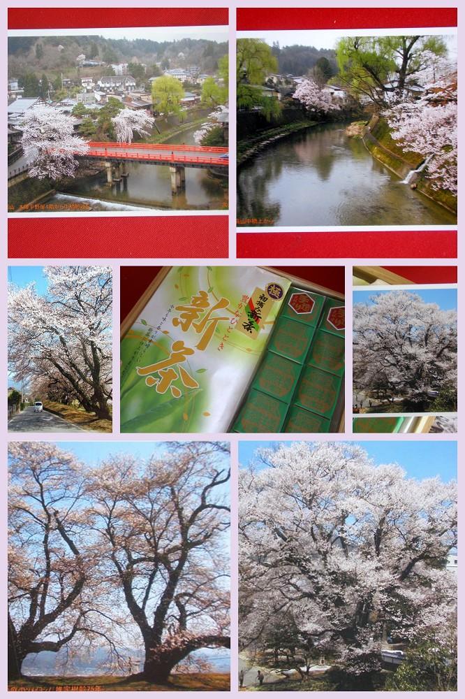 富士のやぶきた茶_a0089450_15571430.jpg