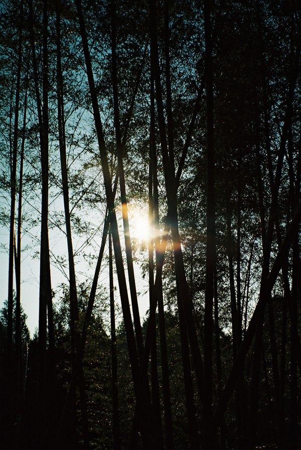 太陽と竹はお似合いⅡ_a0174458_22344816.jpg