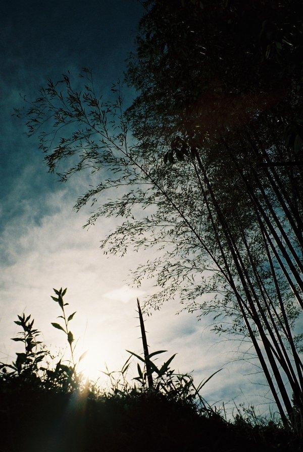 太陽と竹はお似合いⅡ_a0174458_22383670.jpg