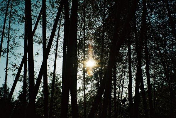 太陽と竹はお似合いⅡ_a0174458_22393466.jpg