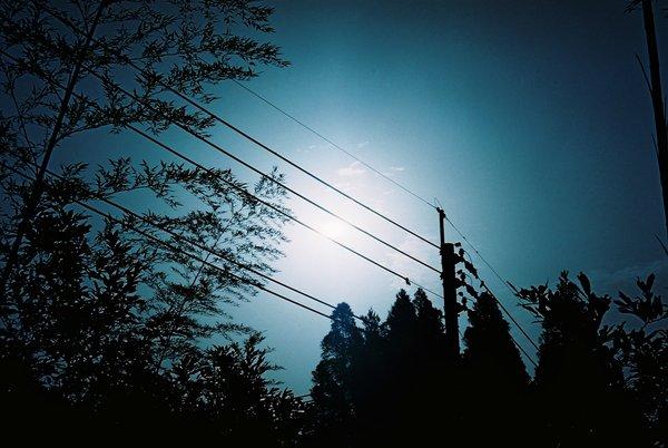 太陽と竹はお似合いⅡ_a0174458_22403474.jpg