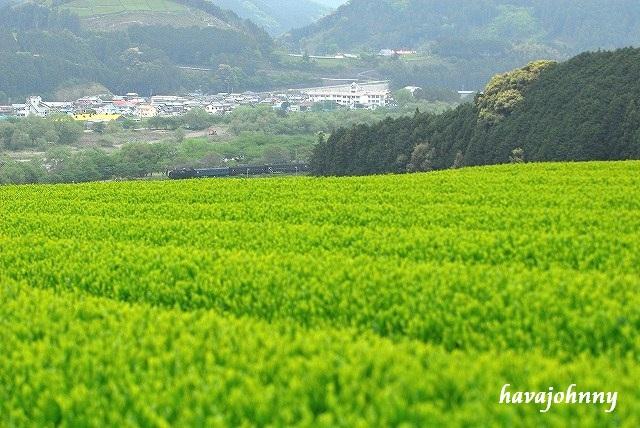 新茶と煙の相関関係?~大井川その4~_c0173762_21412625.jpg