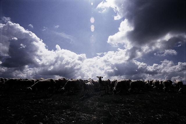 ホロゴンさんの羊飼いと私の羊飼いのおじさんと犬_a0031363_3184570.jpg