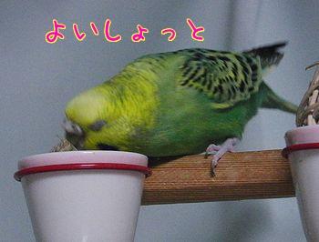 f0196665_23252813.jpg