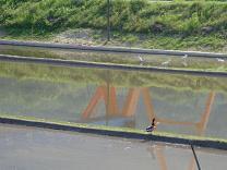 三津口湾の干潟を眺めながら_e0175370_23274845.jpg