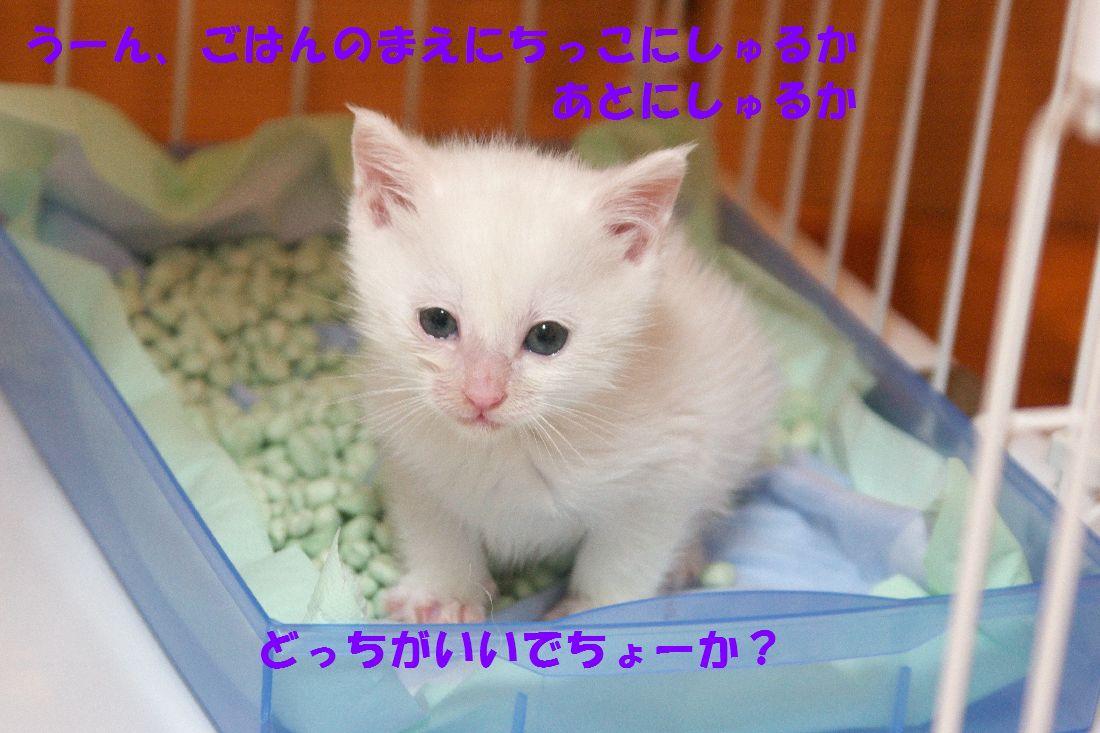 f0197682_224437100.jpg