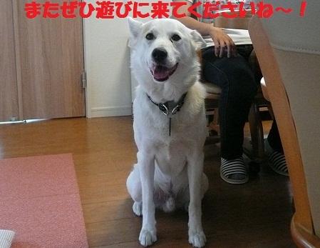 f0121712_1525486.jpg