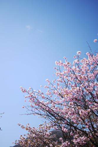 桜日和_f0032814_2042301.jpg