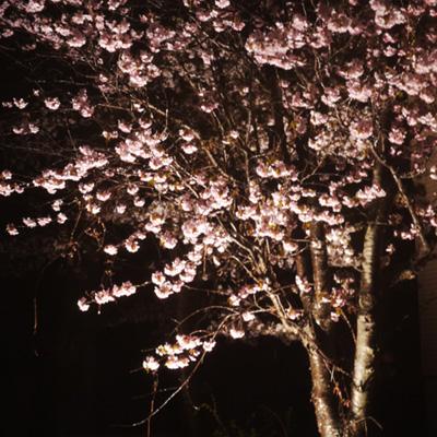 桜日和_f0032814_2054304.jpg