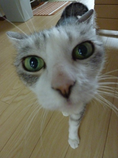 猫のお友だち マシャちゃん海くんメルモちゃん編。_a0143140_2148519.jpg