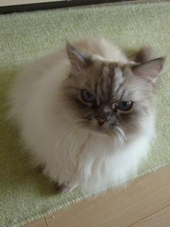 猫のお友だち マシャちゃん海くんメルモちゃん編。_a0143140_21534811.jpg