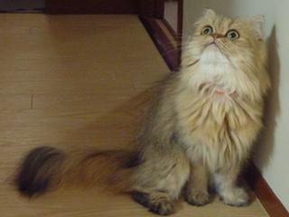 猫のお友だち マシャちゃん海くんメルモちゃん編。_a0143140_21555294.jpg
