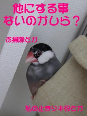 b0158061_19564751.jpg
