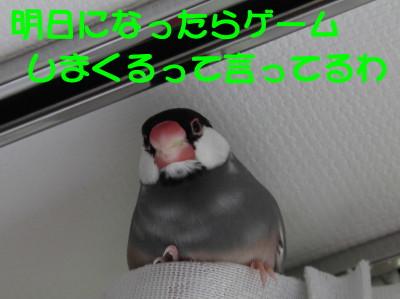 b0158061_19565581.jpg