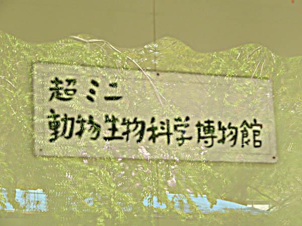 d0138170_201543.jpg