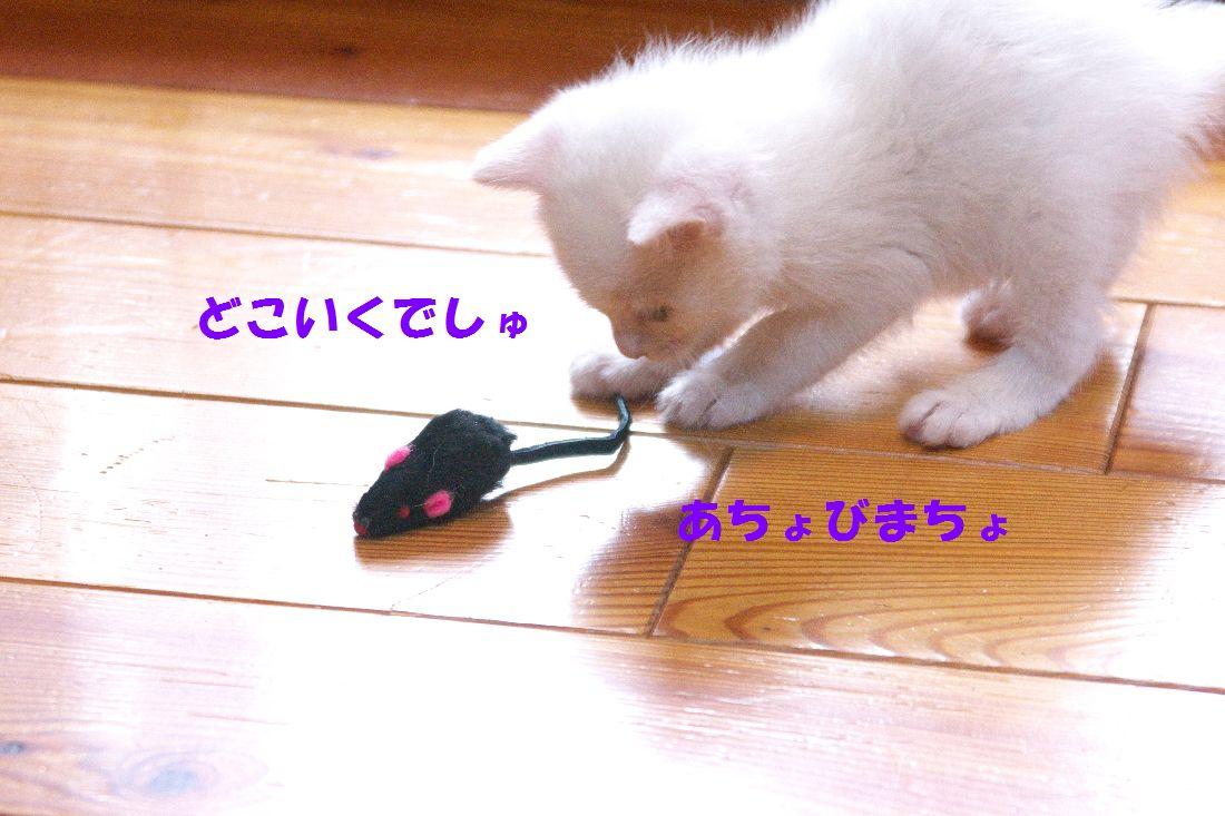 f0197682_15455410.jpg