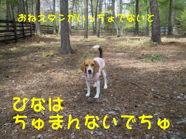 c0166622_8191325.jpg