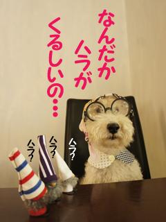 こいするピヨンセちゃん_d0196124_17282783.jpg
