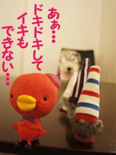 こいするピヨンセちゃん_d0196124_17284250.jpg