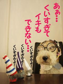 こいするピヨンセちゃん_d0196124_17291413.jpg
