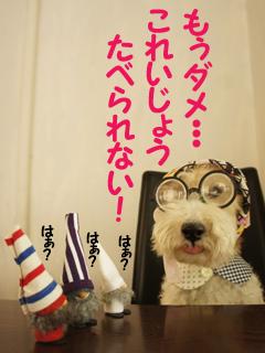 こいするピヨンセちゃん_d0196124_17303546.jpg