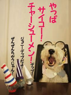 こいするピヨンセちゃん_d0196124_17313194.jpg