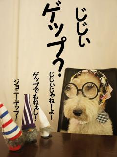 こいするピヨンセちゃん_d0196124_17315010.jpg
