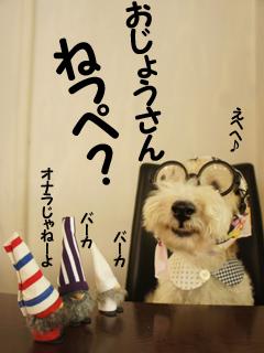 こいするピヨンセちゃん_d0196124_17323341.jpg