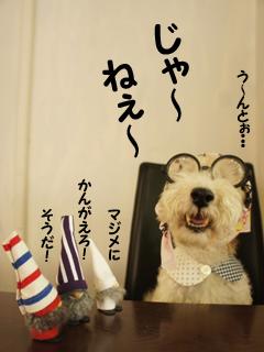 こいするピヨンセちゃん_d0196124_1733484.jpg