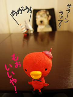 こいするピヨンセちゃん_d0196124_17341032.jpg