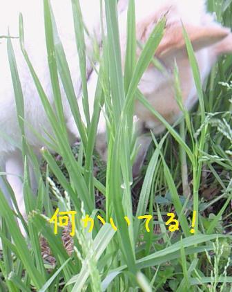 b0138430_20525456.jpg