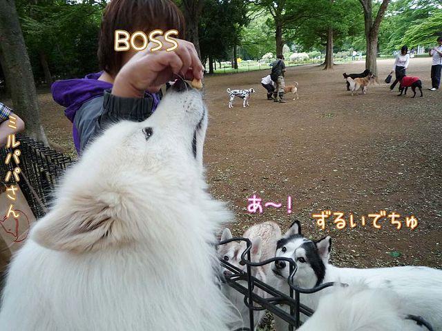日曜日もおっきな公園_c0062832_644812.jpg