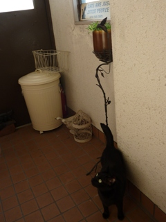 ひとりになりたいとき猫 のぇるろった編。_a0143140_22111444.jpg