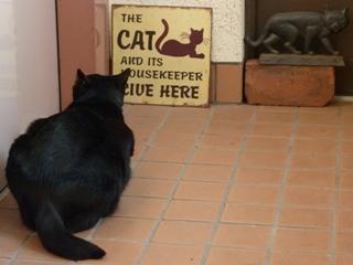 ひとりになりたいとき猫 のぇるろった編。_a0143140_22628100.jpg