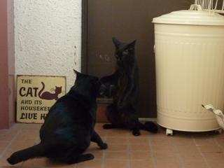ひとりになりたいとき猫 のぇるろった編。_a0143140_2271776.jpg